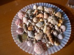 Plate of seashells