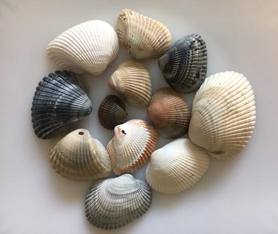 ark shells