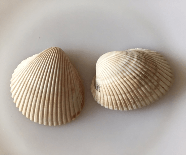 cockle shell and ark shell