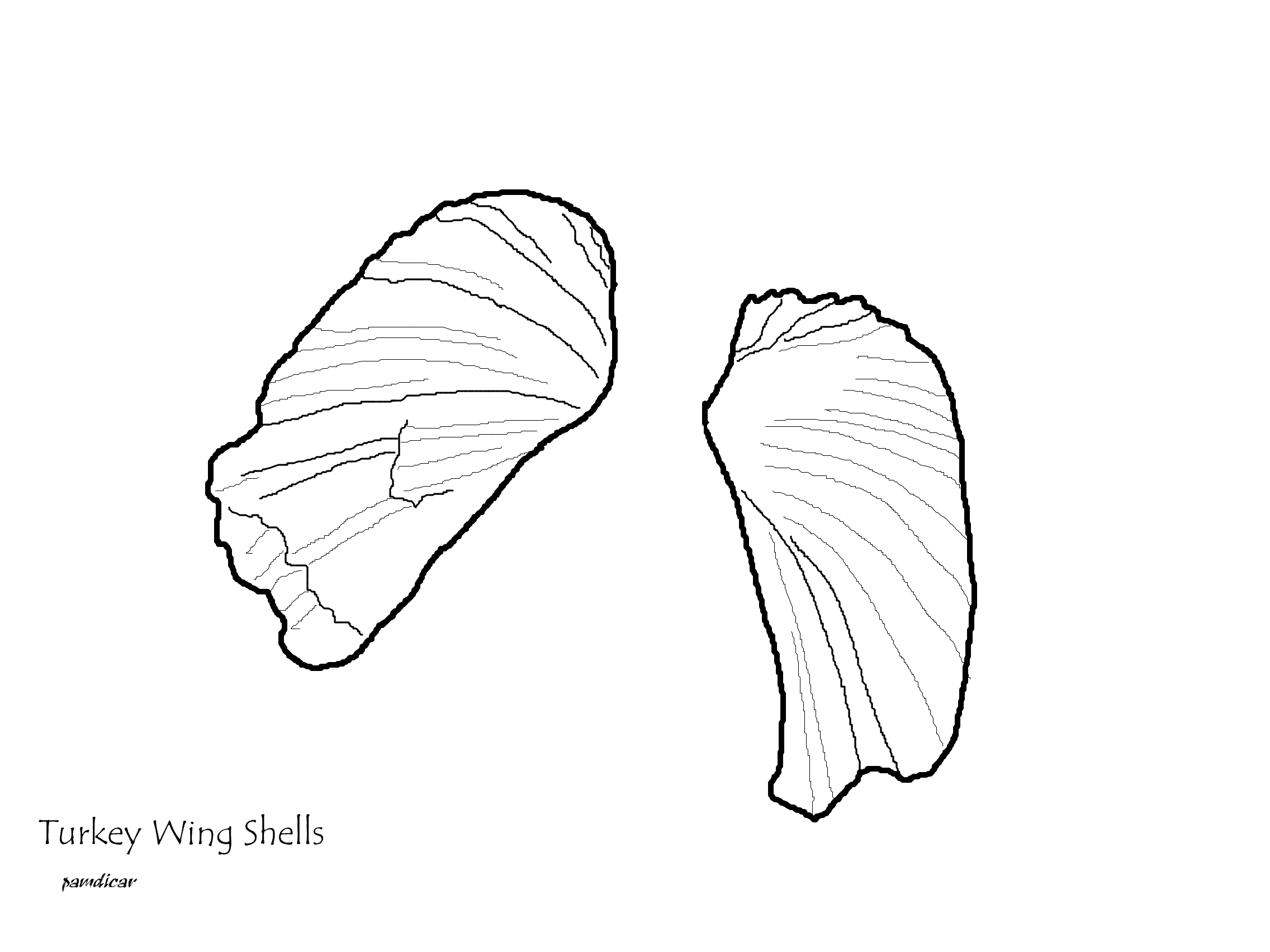 coloring page seashells by millhill