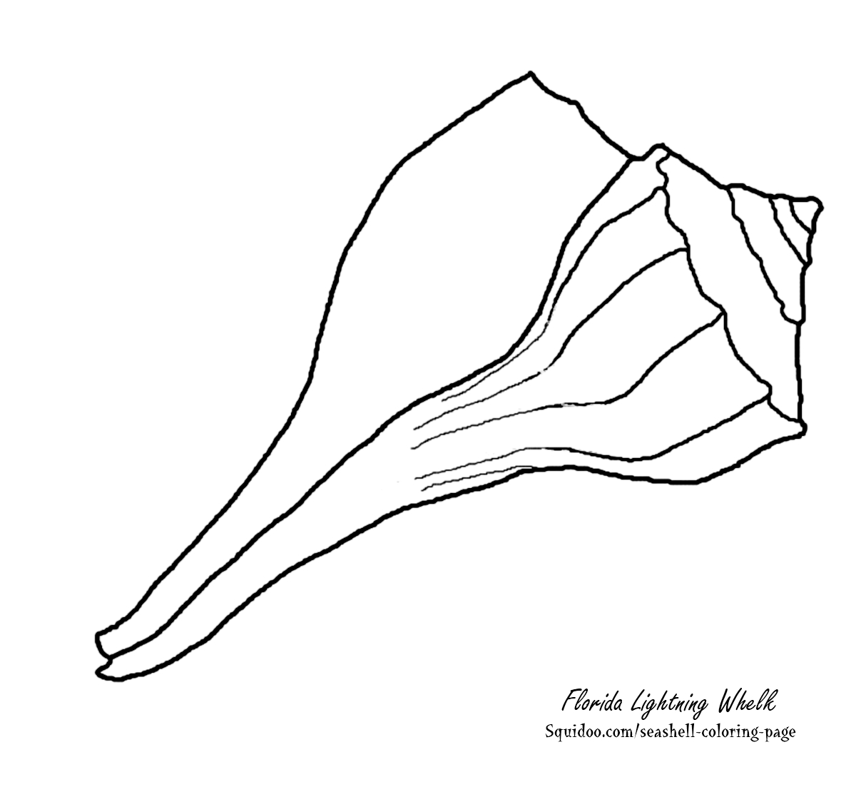 Free seashell coloring pages update seashells by millhill for Sea shell coloring pages