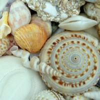 Classifying Seashells