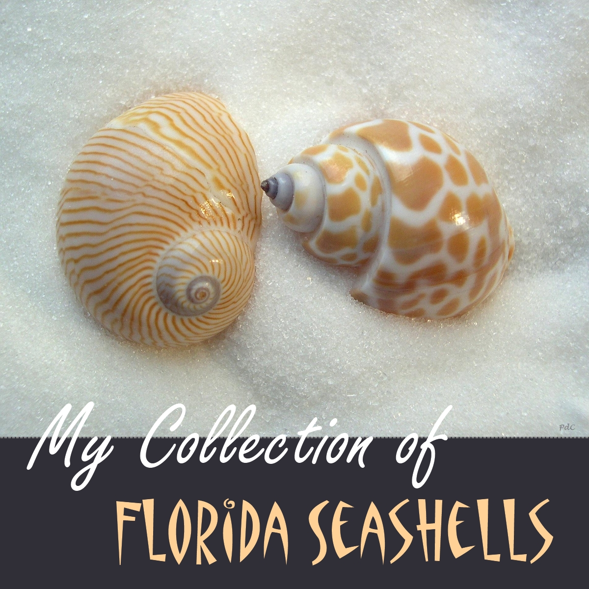 Florida Beaches, Travel And Shell