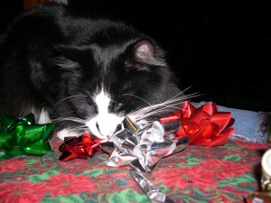 cat eating christmas bows