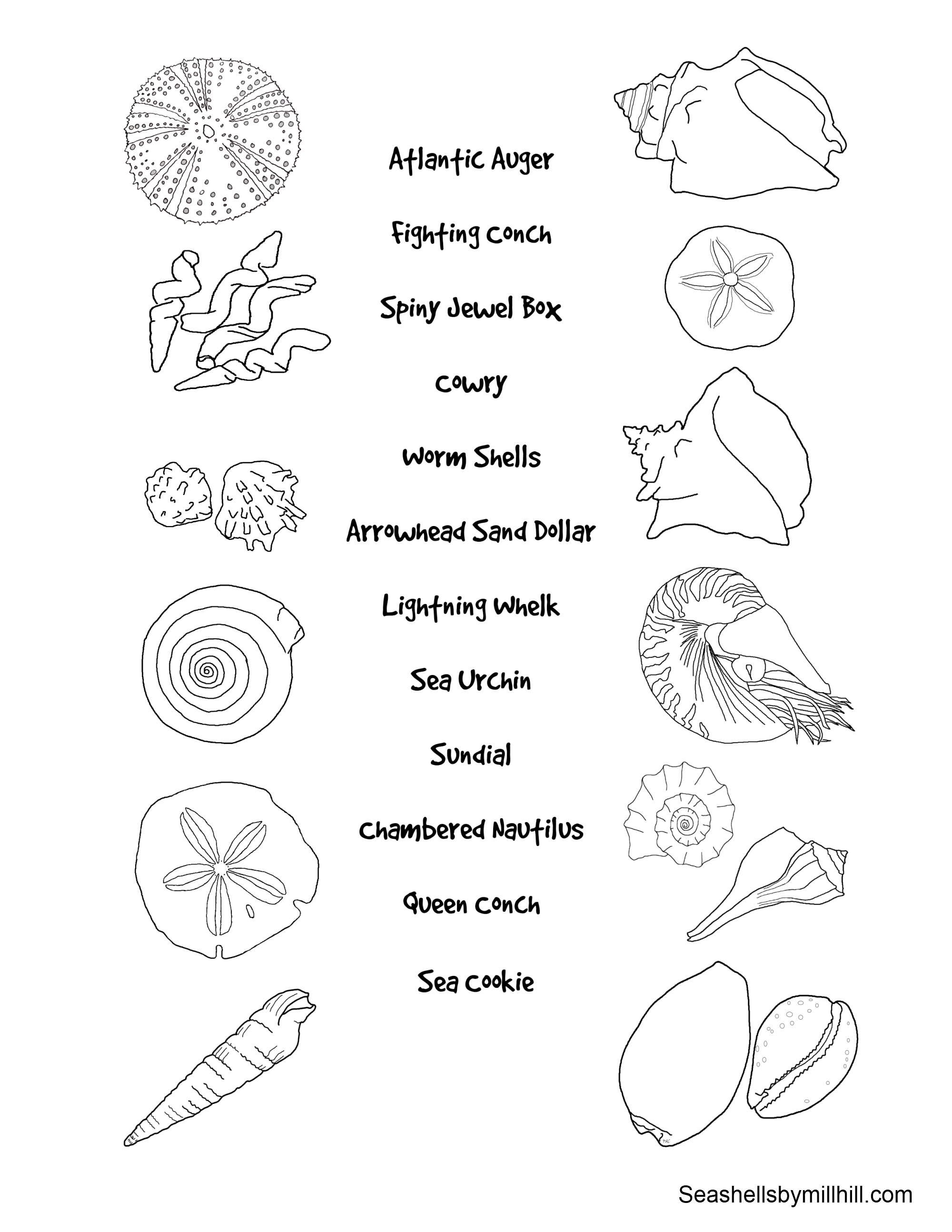 Match the seashells to their names worksheet seashells for Sea shell coloring pages