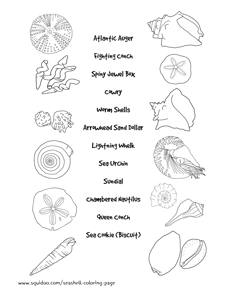 Seashell Identification Matching Page For Teachers