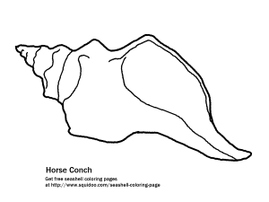 horse conch coloring page