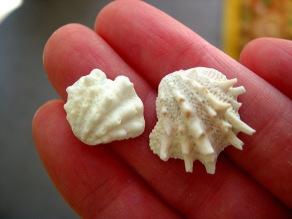 blogging about seashells