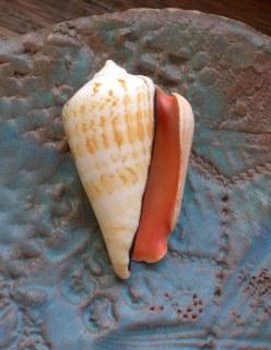 Strawberry conch cone