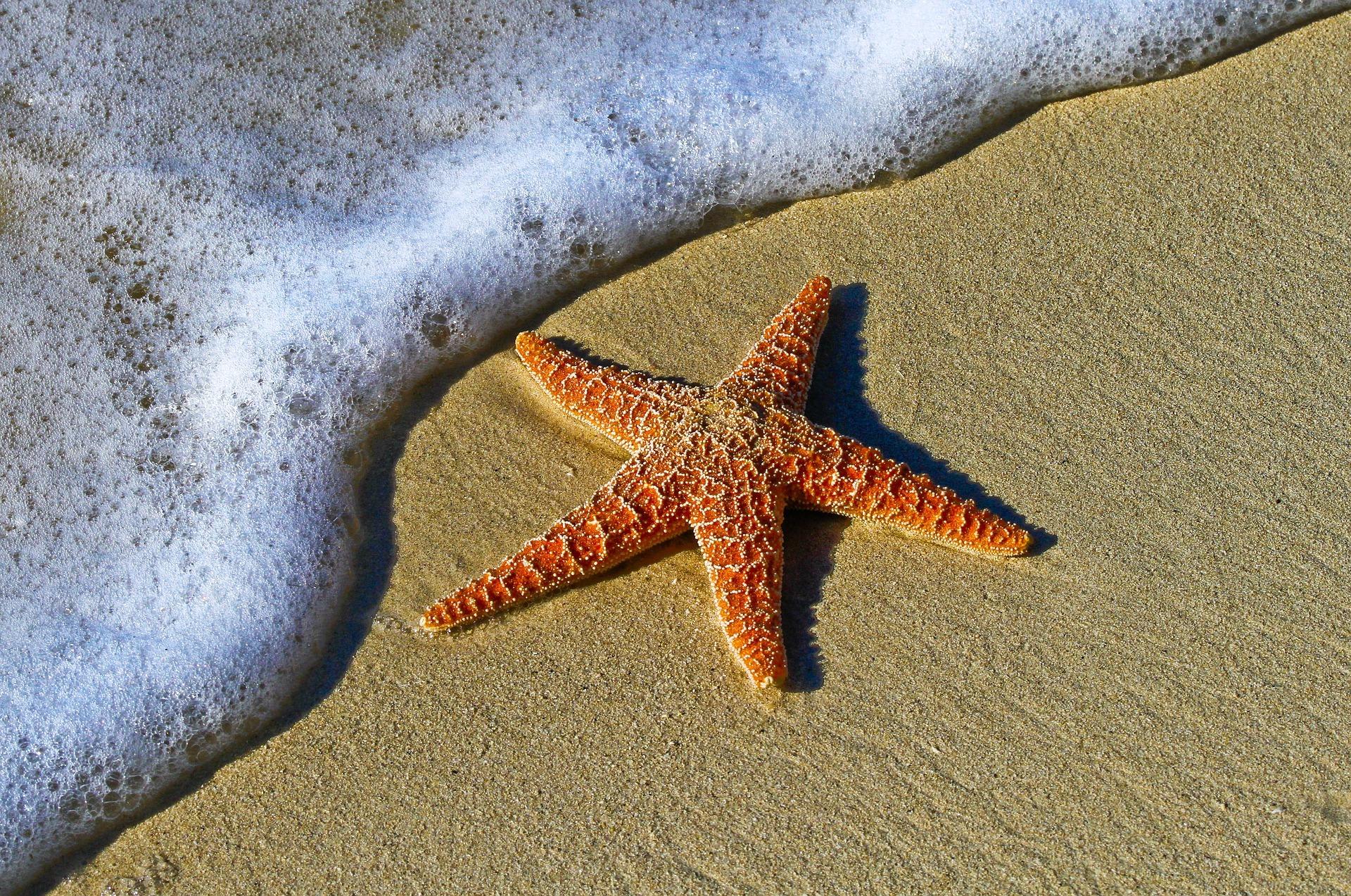 starfish sea star beach sand marine life