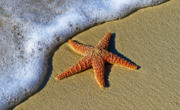 starfish sea star beach sand marine life