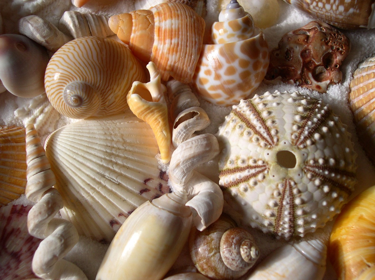 Seashell Names- Two Little Shells