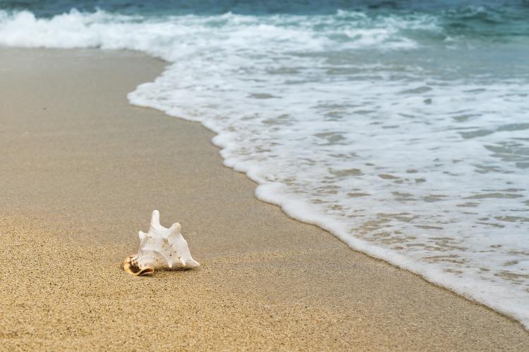 big seashell on the beach