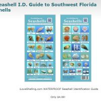 Seashell Identification Charts For Florida Shellers