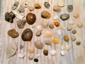 picture of seashells