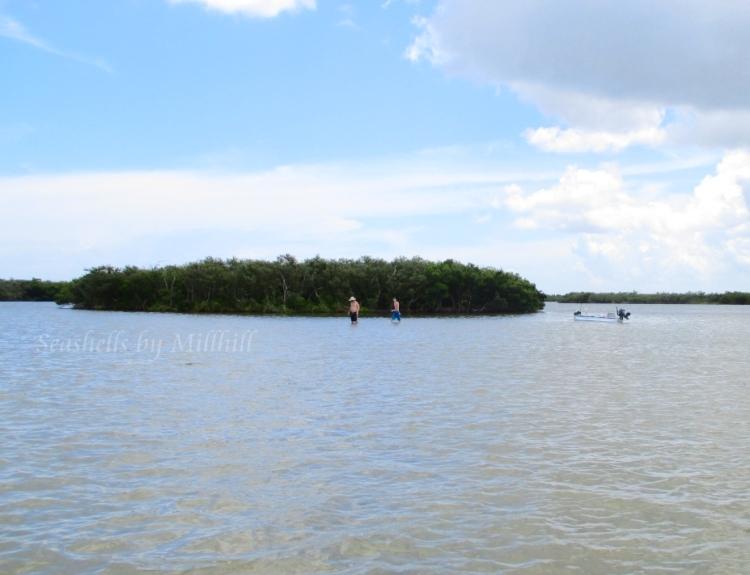 intracoastal waterway backwater