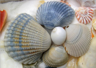 blue seashells