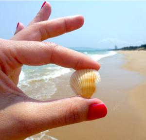 collecting seashells
