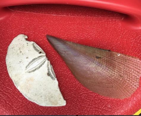 shells found at beach