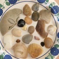 Common Shells Found on Florida's East Coast Beaches