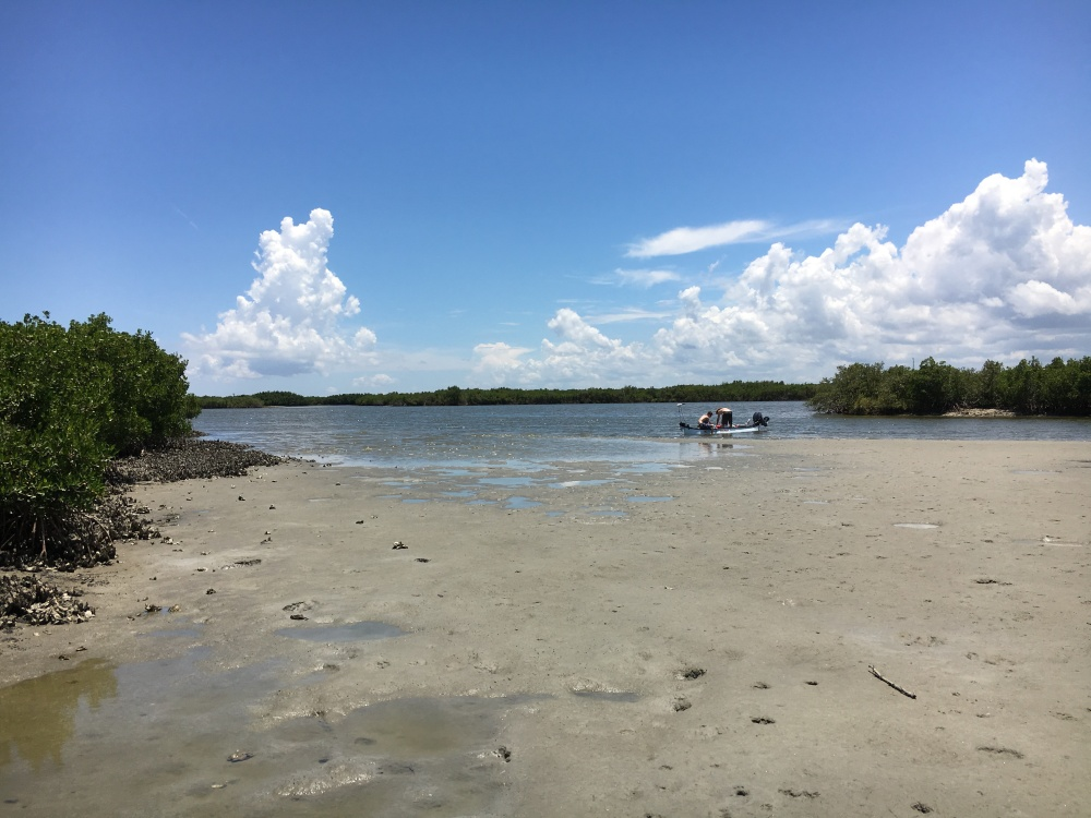 low tide on the Indian River