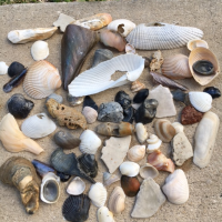 Take A Closer Look When Seashell Collecting