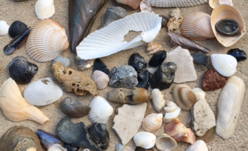 east coast florida beach shells