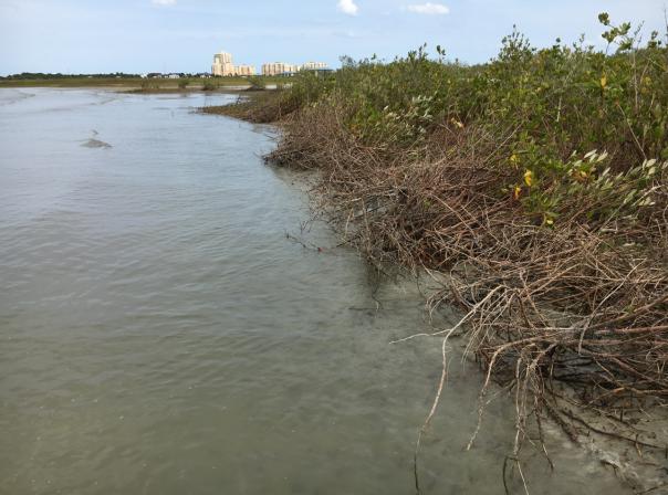 marshland island florida