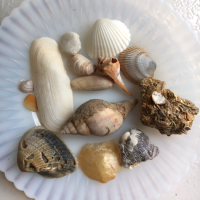 Found Some Great Shells, But Not On the Beach