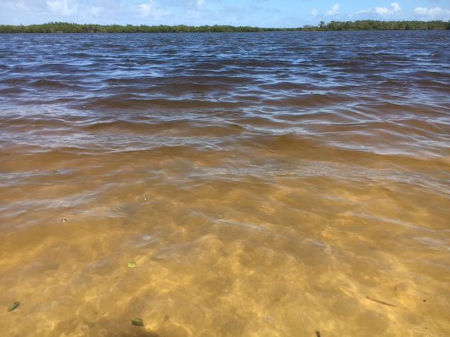 muddy water