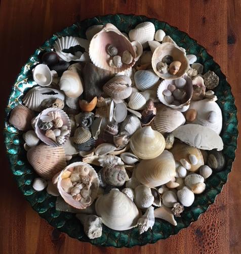 seashells in a big round bowl