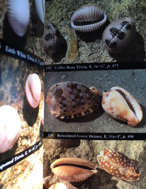 Pictures of seashells inside book