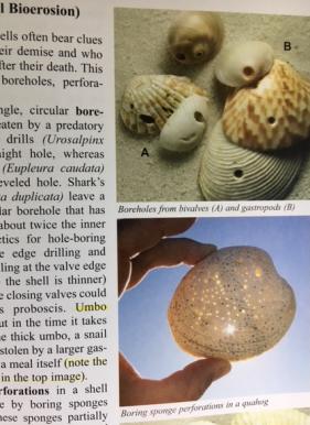 photos inside the book