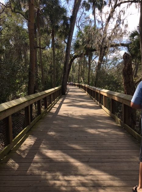 Boardwalk at Blue Springs