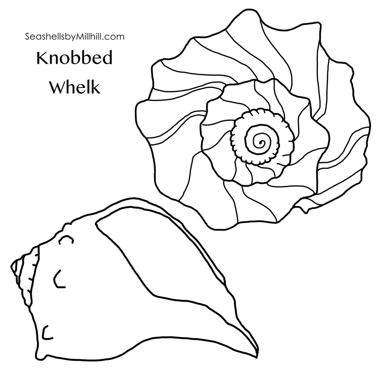 knobbed 2 images