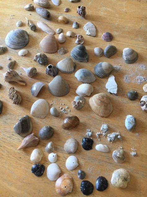Match The Seashells To Their Names Worksheet Seashells