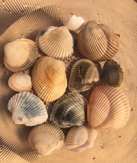 bowl full of ark shells