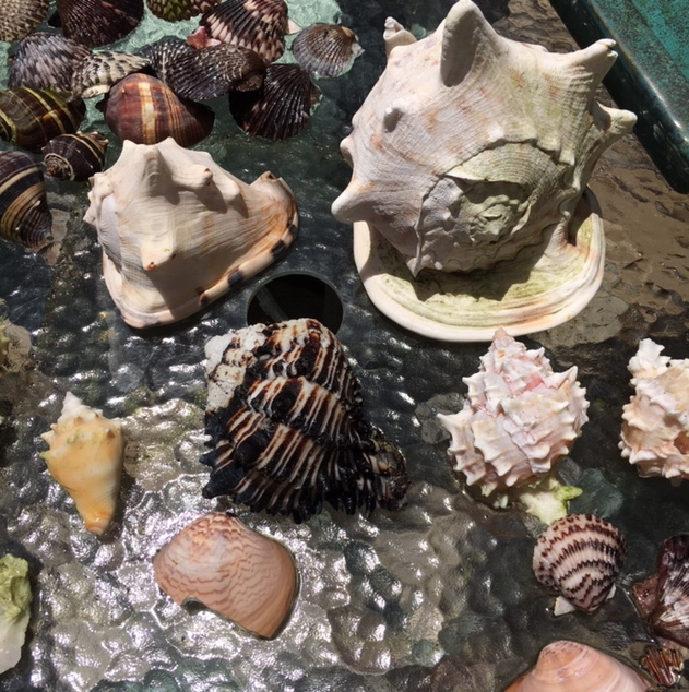 helmets and murex seashells