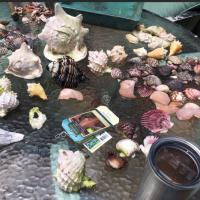 Zana's Seashell Legacy