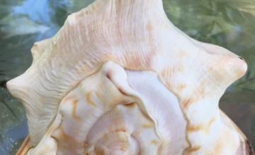 horned helmet shells