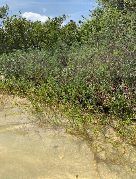 Vines growing along the shoreline