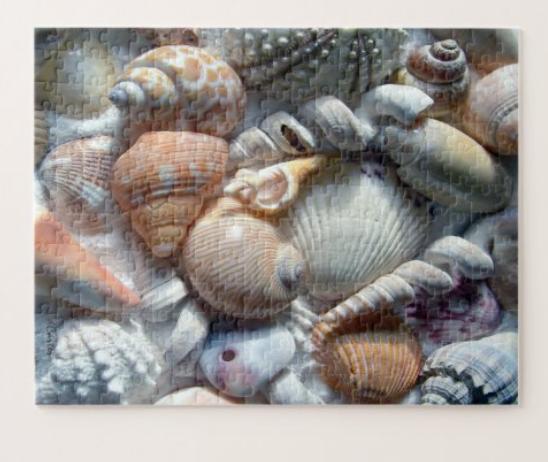 seashell puzzle