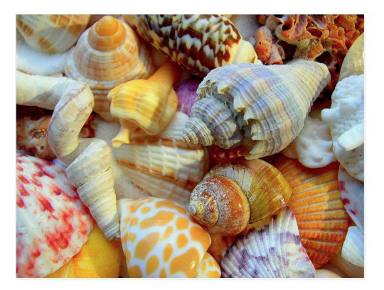 Colorful tropical seashells postcard