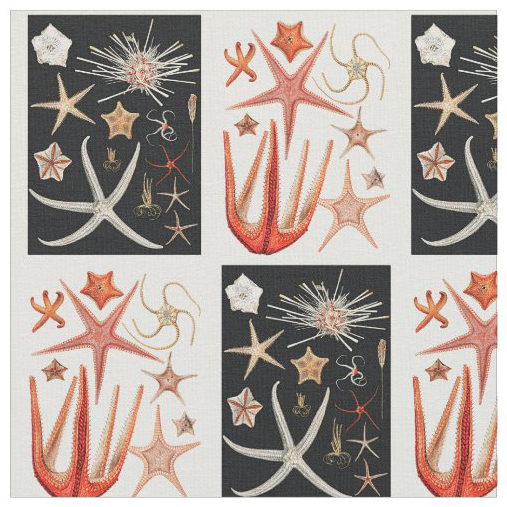 Vintage starfish sea stars pattern fabric sewing crafts quilting black white orange drawings art artwork design beach home decor