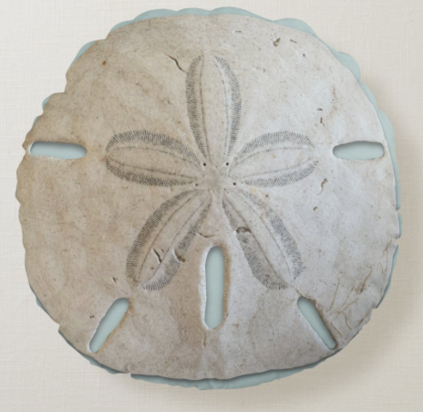 Natural sand dollar round throw pillow coastal decor decorative beach shells realistic