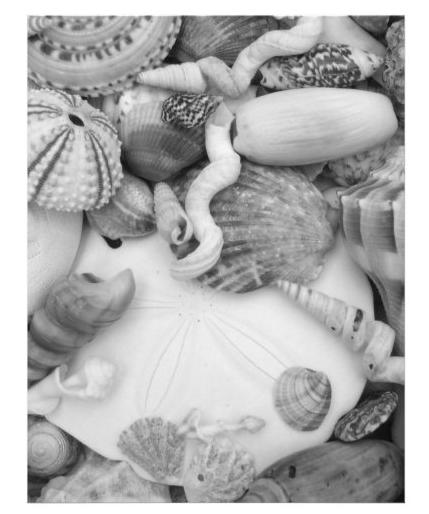 seashell photography shell ID worksheet